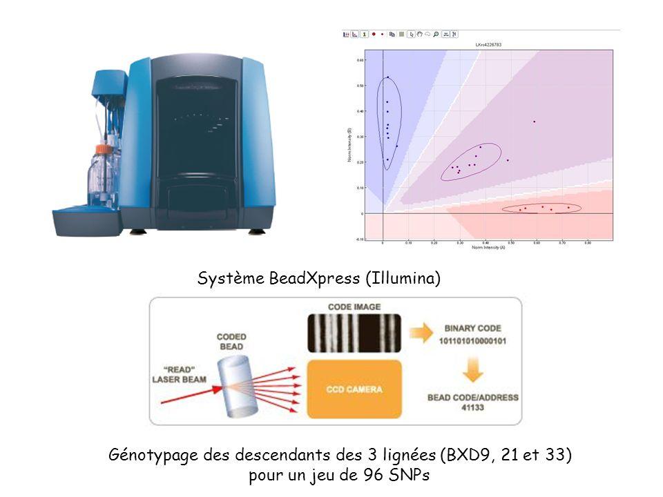 BXD33 D2 F2 Hfe -/- Tests de ségrégation pour la lignée BXD33 et la région candidate sur le chromosome 7 BXD33 B6 (F2 Hfe -/-) BXD33 B6BXD33 D2 Hfe +/+ BBBDDD Corrélation génotype / fer intrahépatique (ANOVA; p<0.0001) 1000 1500 2000 2500 BBBDDD Pas de corrélation génotype / fer intrahépatique (ANOVA; p=0.93) 1000 1500 2000 2500 3000 3500 4000