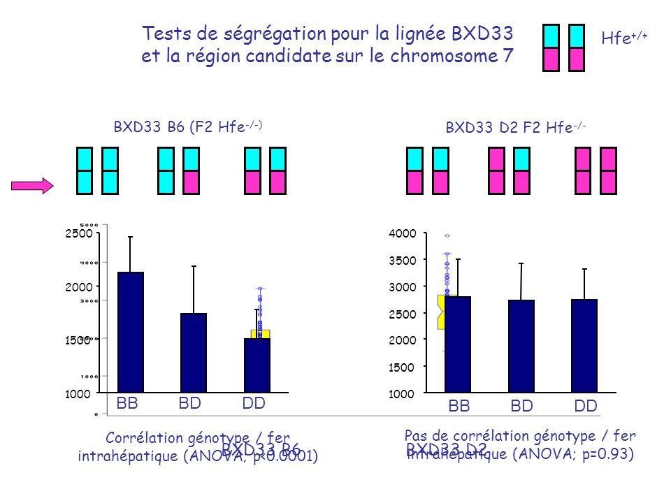 BXD33 D2 F2 Hfe -/- Tests de ségrégation pour la lignée BXD33 et la région candidate sur le chromosome 7 BXD33 B6 (F2 Hfe -/-) BXD33 B6BXD33 D2 Hfe +/