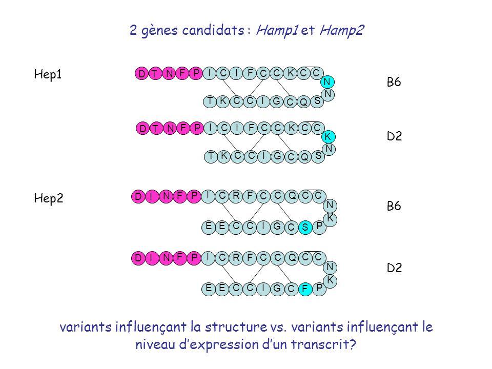 Hep1 Hep2 B6 D2 2 gènes candidats : Hamp1 et Hamp2 variants influençant la structure vs. variants influençant le niveau dexpression dun transcrit?