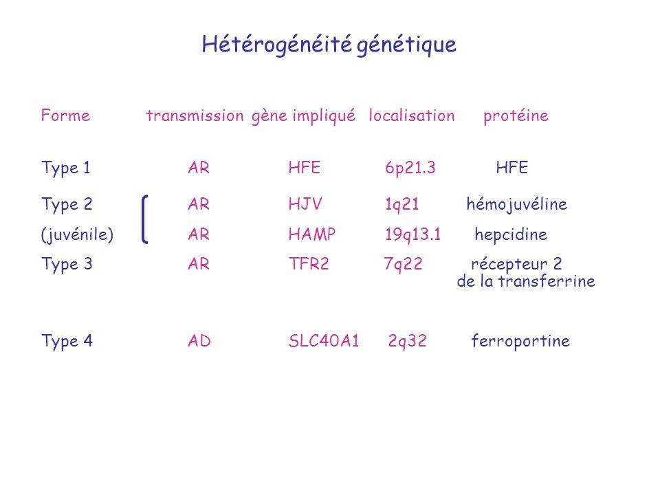 Hétérogénéité génétique Forme transmission gène impliqué localisation protéine Type 2 AR HJV 1q21 hémojuvéline (juvénile) AR HAMP 19q13.1 hepcidine Ty
