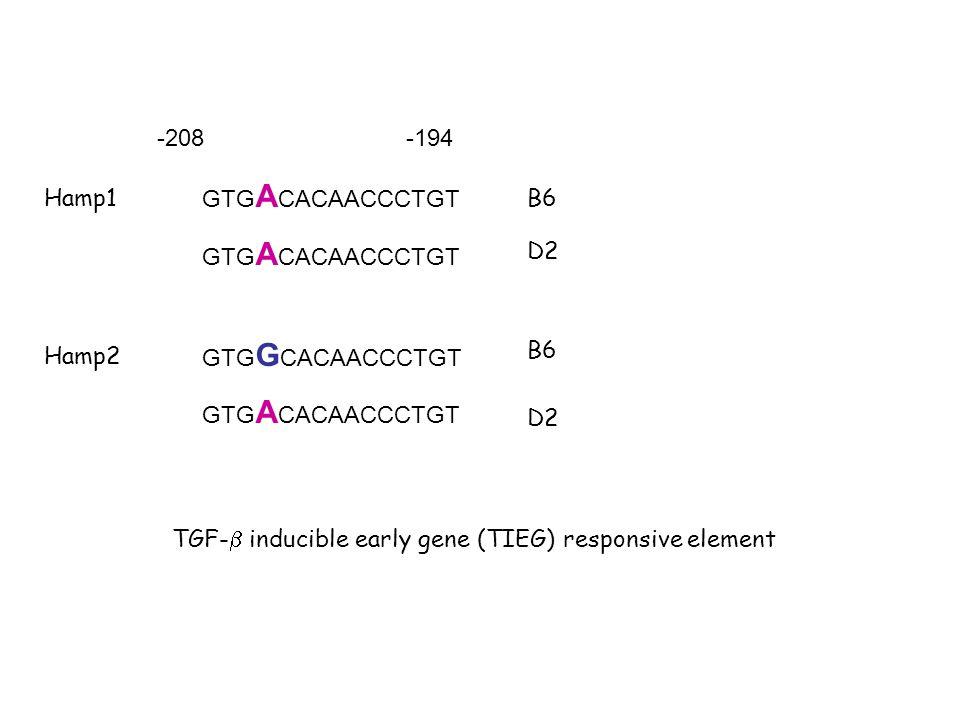 GTG A CACAACCCTGT GTG G CACAACCCTGT GTG A CACAACCCTGT -208-194 Hamp1 Hamp2 B6 D2 TGF- inducible early gene (TIEG) responsive element