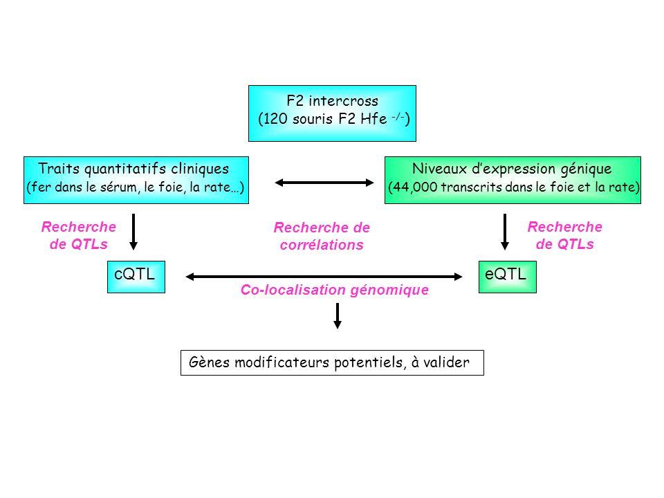F2 intercross (120 souris F2 Hfe -/- ) Niveaux dexpression génique (44,000 transcrits dans le foie et la rate) Traits quantitatifs cliniques (fer dans