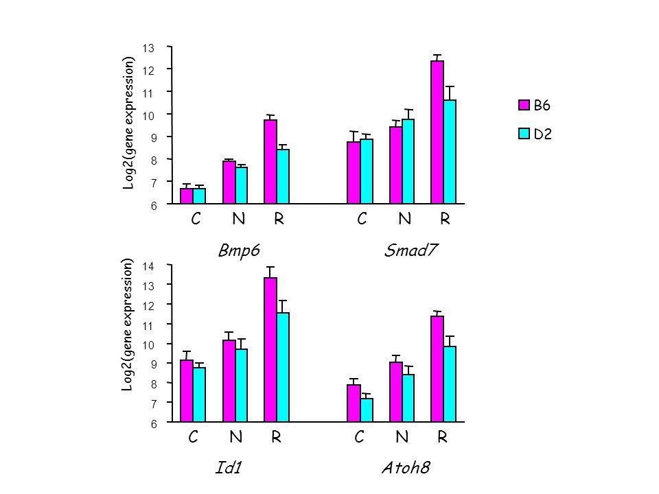 6 7 8 9 10 11 12 13 14 6 7 8 9 10 11 12 13 CNRCNR Id1Atoh8 CNRCNR Bmp6Smad7 Log2(gene expression) B6 D2