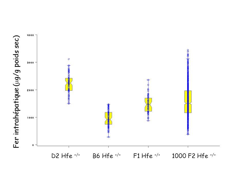 Criblage du génome sur des animaux F2 obtenus à partir du croisement entre souris B6 et D2 Hfe -/- > 40 000 génotypes sur la plate-forme Génomique (Génopole de Toulouse)