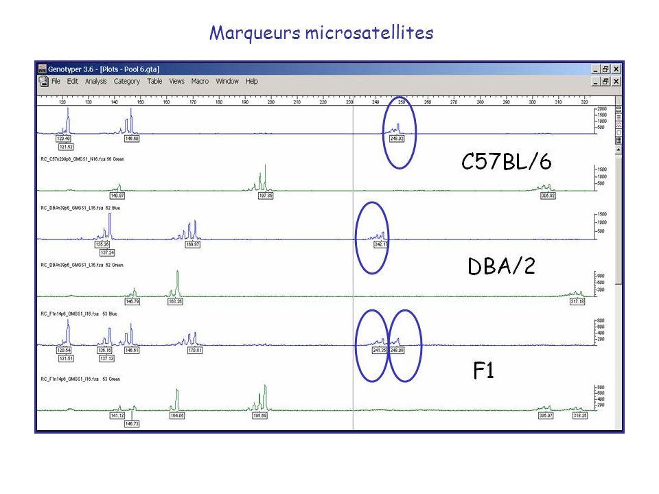 Marqueurs microsatellites