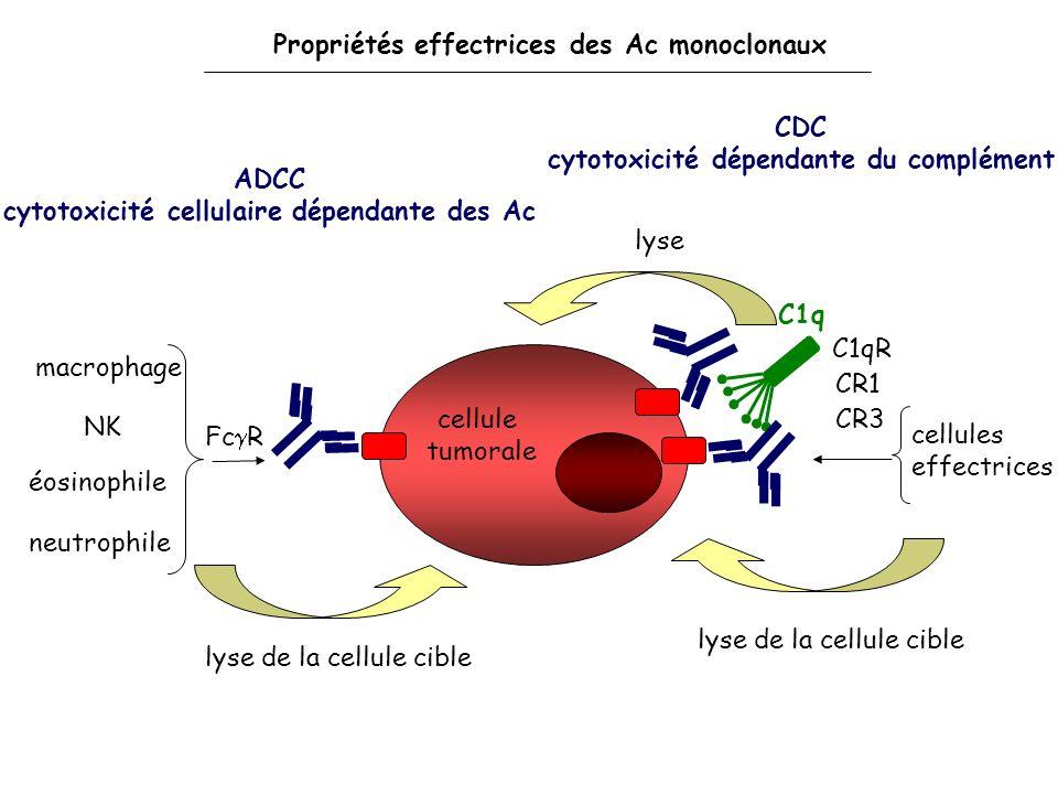 cellule tumorale ADCC cytotoxicité cellulaire dépendante des Ac CDC cytotoxicité dépendante du complément macrophage NK éosinophile neutrophile lyse d