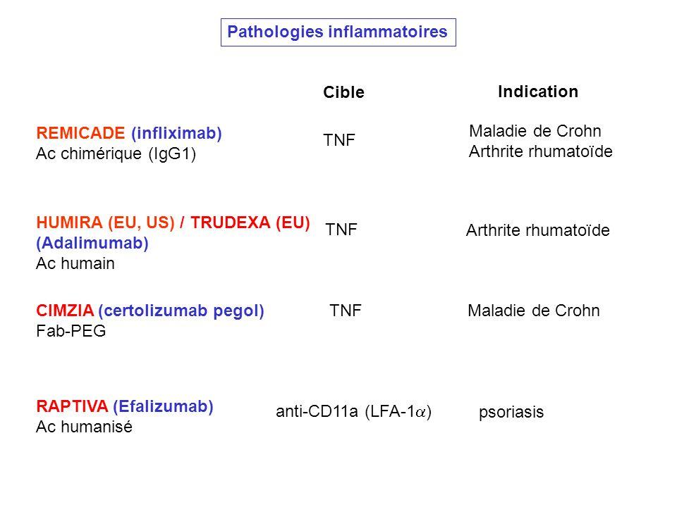 Pathologies inflammatoires REMICADE (infliximab) Ac chimérique (IgG1) Cible Indication Maladie de Crohn Arthrite rhumatoïde TNF HUMIRA (EU, US) / TRUD