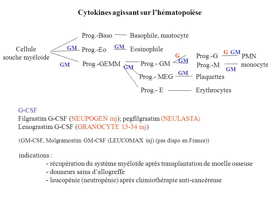 Cytokines agissant sur lhématopoièse G-CSF Filgrastim G-CSF (NEUPOGEN inj); pegfilgrastim (NEULASTA ) Lenograstim G-CSF (GRANOCYTE 13-34 inj) (GM-CSF,