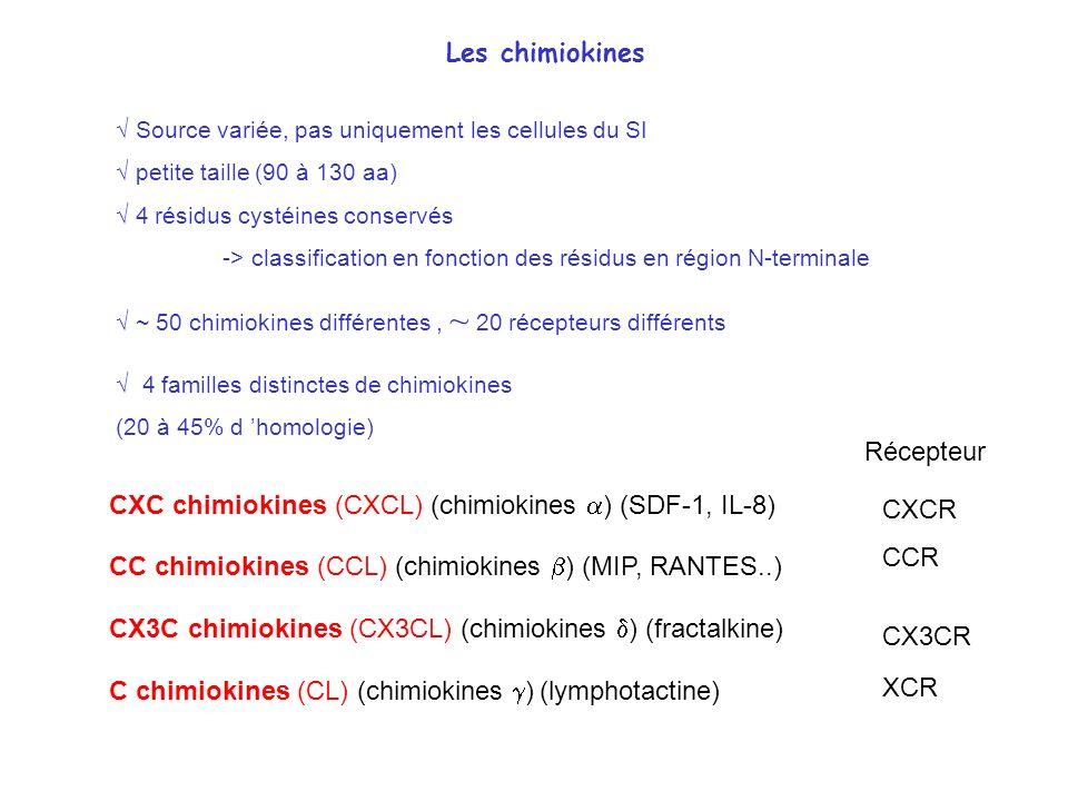 4 familles distinctes de chimiokines (20 à 45% d homologie) CCR CC chimiokines (CCL) (chimiokines ) (MIP, RANTES..) Récepteur CXC chimiokines (CXCL) (