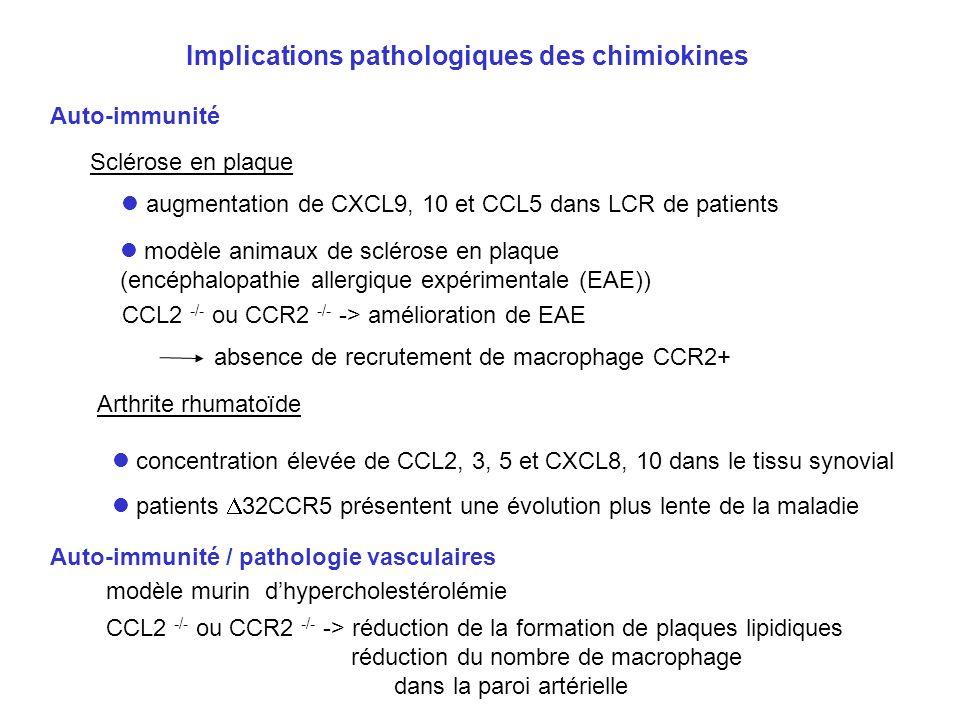 Implications pathologiques des chimiokines Auto-immunité CCL2 -/- ou CCR2 -/- -> amélioration de EAE modèle animaux de sclérose en plaque (encéphalopa