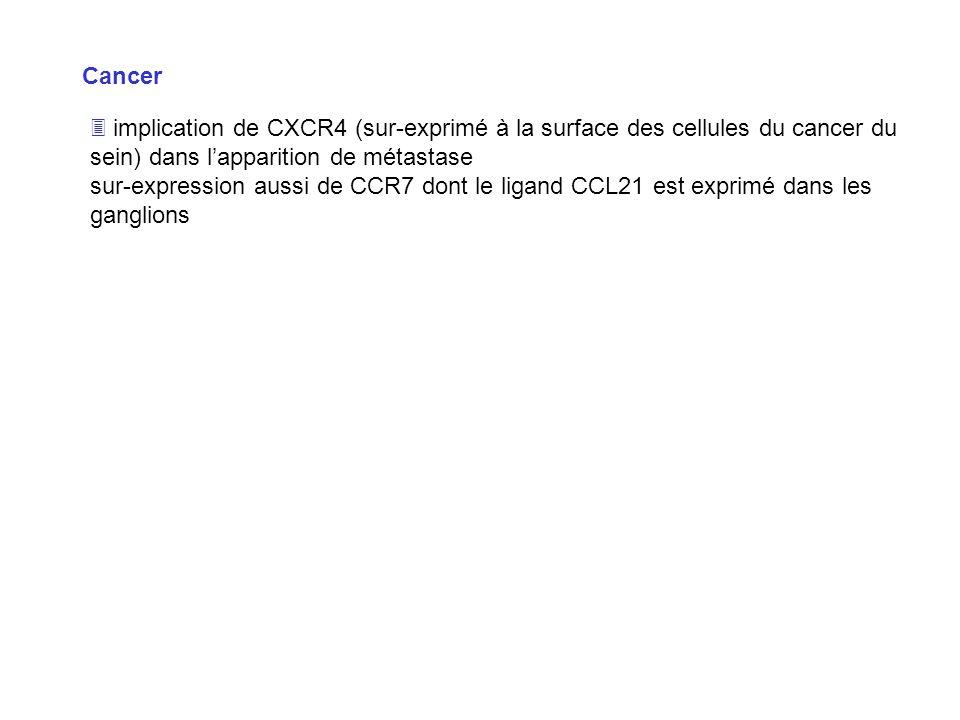 Cancer implication de CXCR4 (sur-exprimé à la surface des cellules du cancer du sein) dans lapparition de métastase sur-expression aussi de CCR7 dont
