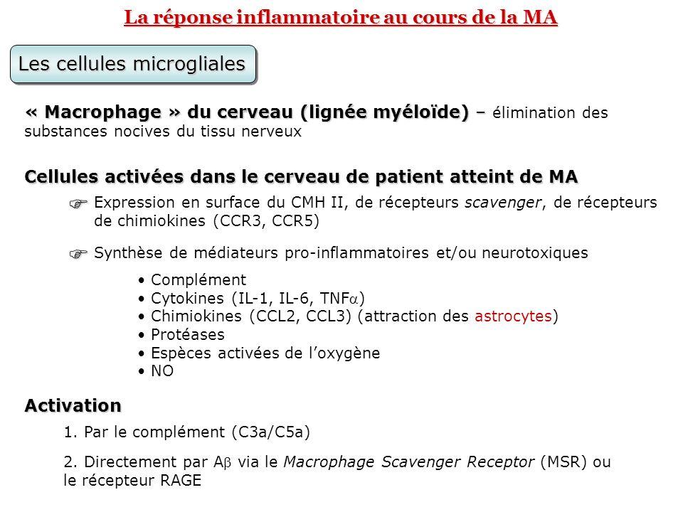 La réponse inflammatoire au cours de la MA Les cellules microgliales « Macrophage » du cerveau (lignée myéloïde) – « Macrophage » du cerveau (lignée m