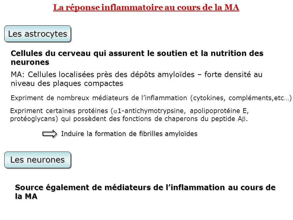 La réponse inflammatoire au cours de la MA Les astrocytes Cellules du cerveau qui assurent le soutien et la nutrition des neurones MA: Cellules locali