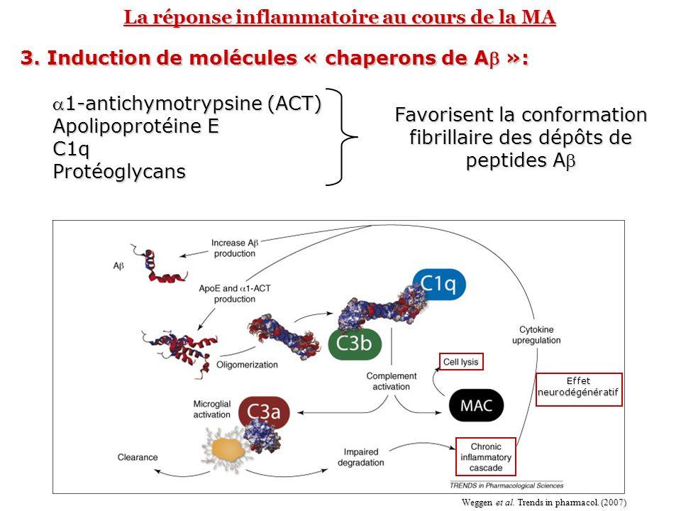 La réponse inflammatoire au cours de la MA 3. Induction de molécules « chaperons de A »: 1-antichymotrypsine (ACT)1-antichymotrypsine (ACT) Apolipopro