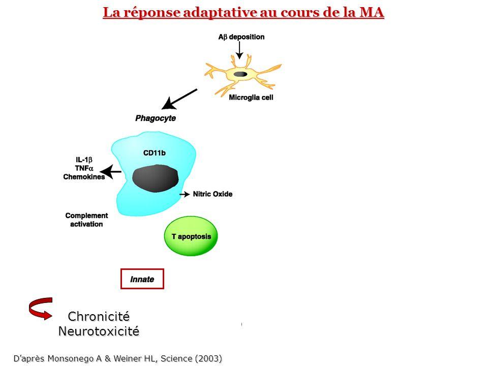 Réponse anticorps Cellules microgliales = CPAs Coopération cellulaire au sein du CNS La réponse adaptative au cours de la MA ChronicitéNeurotoxicité D