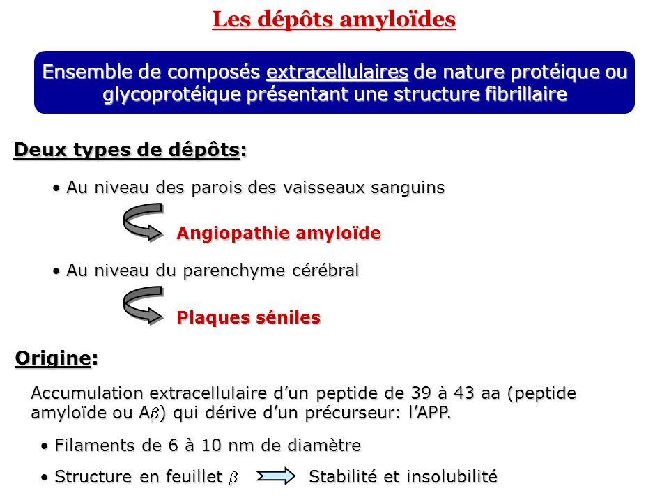 Les dépôts amyloïdes Ensemble de composés extracellulaires de nature protéique ou glycoprotéique présentant une structure fibrillaire Deux types de dé