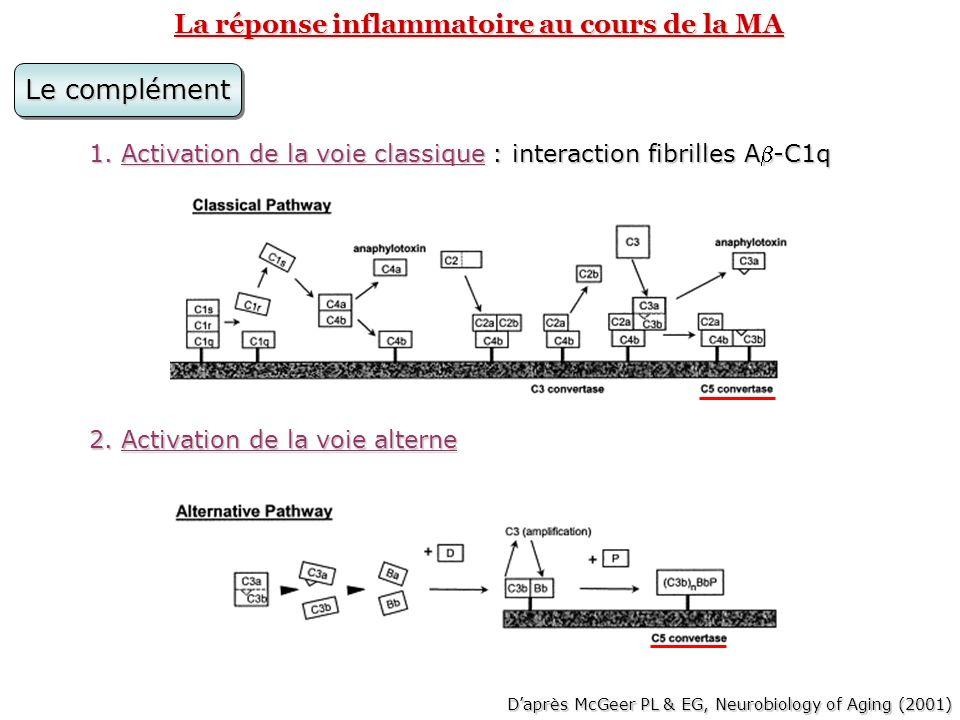 La réponse inflammatoire au cours de la MA Les effets: Activation du complexe dattaque membranaire: lyse des neurones Activation du complexe dattaque membranaire: lyse des neurones Libération danaphylatoxines (C3a et C5a): Libération danaphylatoxines (C3a et C5a): attirent et activent les cellules microgliales et astrocytaires sur le site de dépôt des fibrilles A.