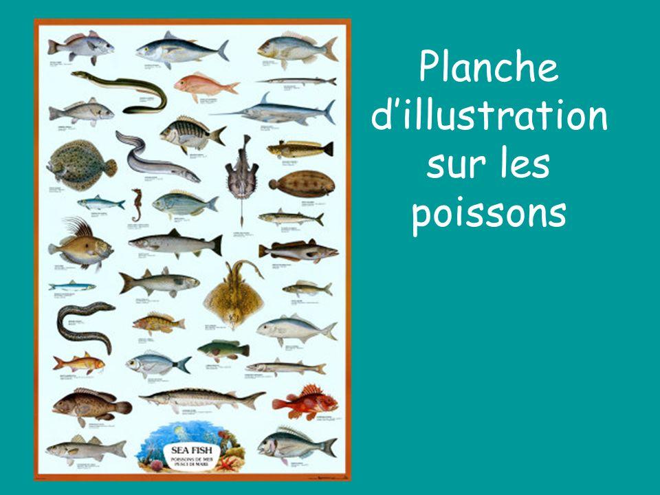 Planche dillustration sur les poissons