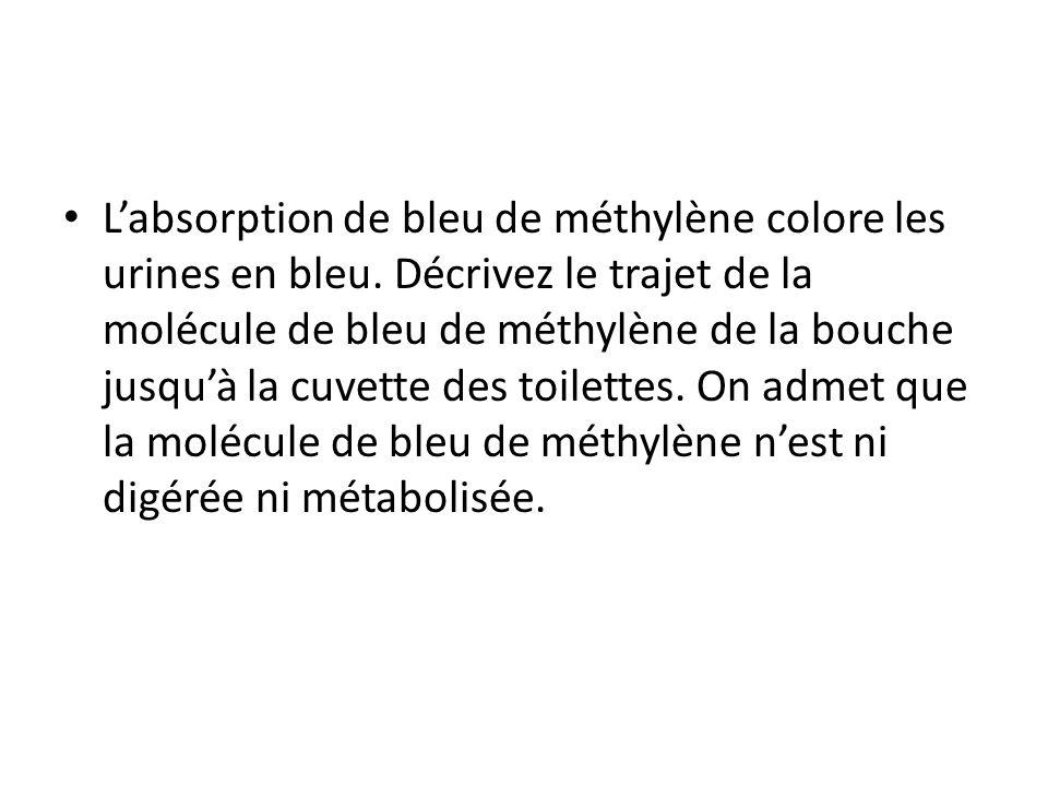 Labsorption de bleu de méthylène colore les urines en bleu. Décrivez le trajet de la molécule de bleu de méthylène de la bouche jusquà la cuvette des