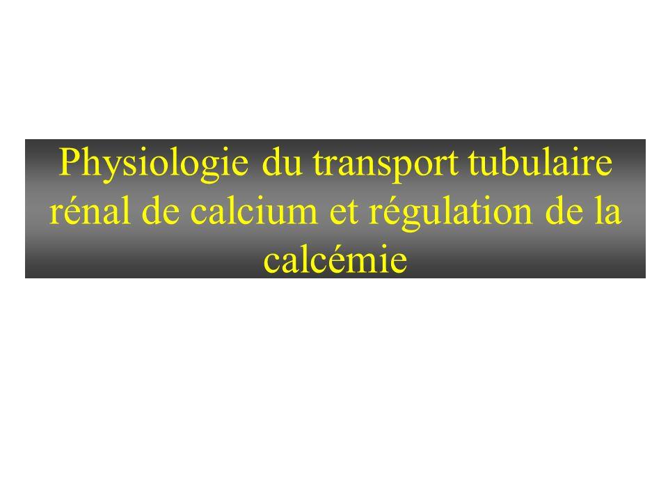 Physiologie du transport tubulaire rénal de calcium et régulation de la calcémie