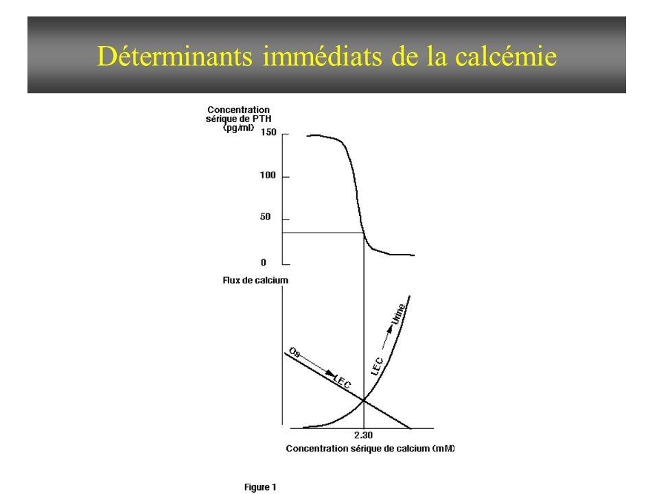 Déterminants immédiats de la calcémie