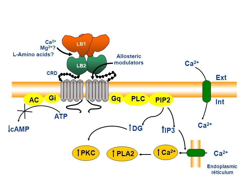 S147 D190 S170 Q193 E297 S296 F270 Y218 LB LB1 LB2 LB1 LB2 LB1 LB2 LB1 Ca 2+ Mg 2+ ? L-amino acids? Allosteric modulators Kunishima N. et al., Nature,