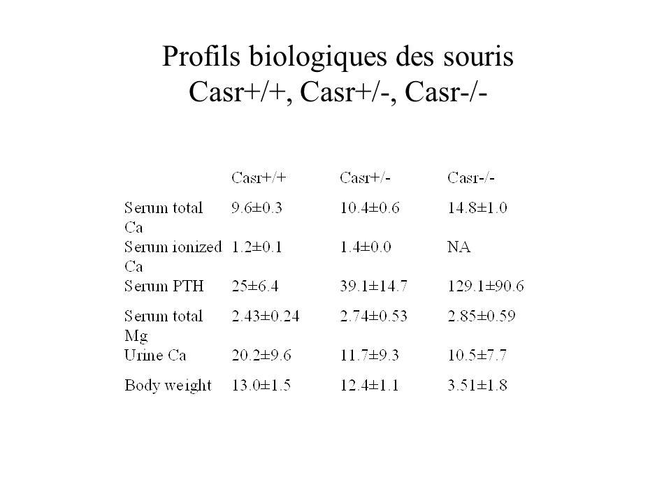 Ca 2+ Gq PLC PIP2 DG IP3 PKC PLA2 Ca 2+ Gi AC cAMP ATP Ext Int LB2 LB1 Ca 2+ Mg 2+ ? L-Amino acids? Allosteric modulators CRD Endoplasmic réticulum