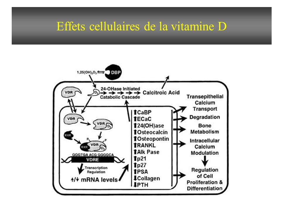 Biosynthèse et actions de la vitamine D