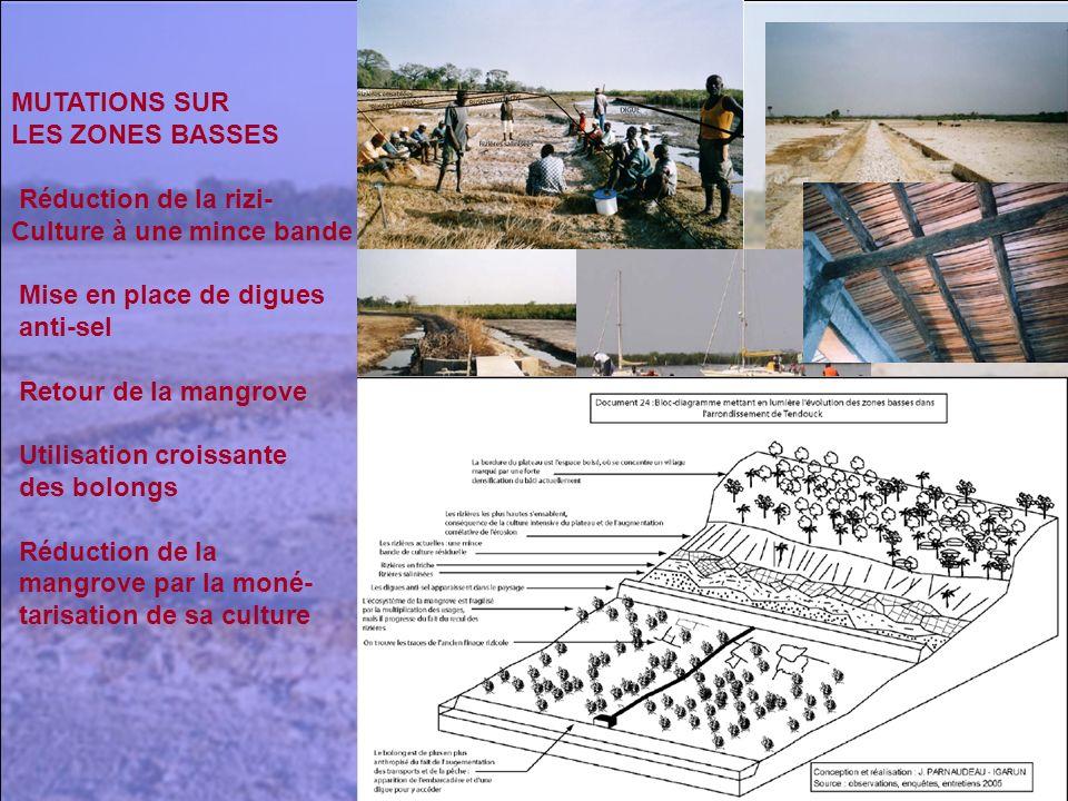 MUTATIONS SUR LES ZONES BASSES Réduction de la rizi- Culture à une mince bande Mise en place de digues anti-sel Retour de la mangrove Utilisation croi