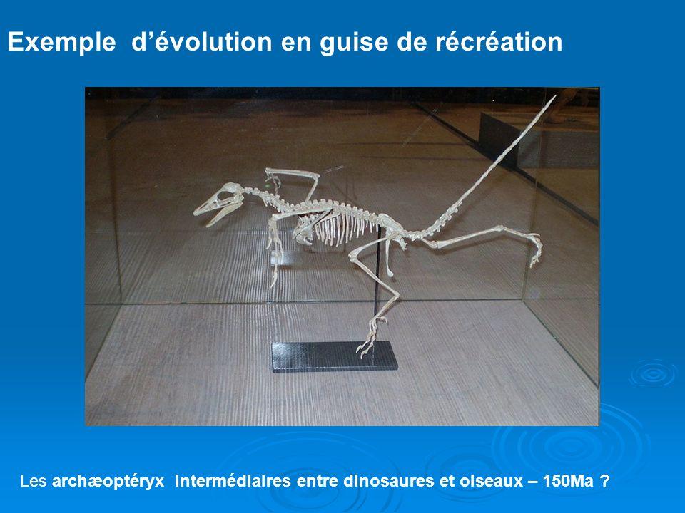 Pour appuyer sa thèse, Darwin étudie les variations despèce en fonction de la géographie et de la paleontologie…. Pour appuyer sa thèse, Darwin étudie