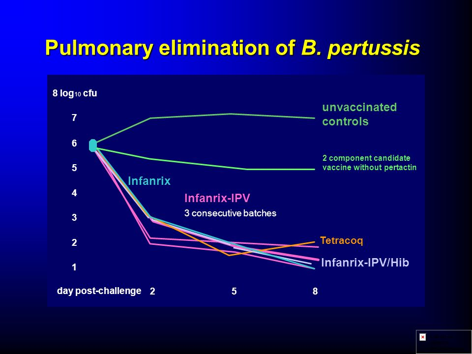 Pulmonary elimination of B. pertussis 1 2 3 4 5 6 7 8 log 10 cfu 258 day post-challenge Tetracoq Infanrix unvaccinated controls Infanrix-IPV/Hib Infan
