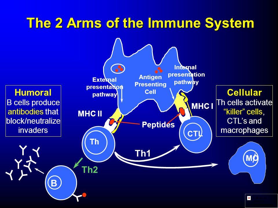 Etudes cliniques Objectifs vComparer la réactogénicité et limmunogénicité de la combinaison Infanrix- HepB-IPV/Hib avec différents vaccins monovalents ou combinés présents sur le marché, en particulier : u DTPa-IPV/Hib u DTPw-IPV/Hib (Pentacoq PMC) u HB, DTPa, Hib, OPV