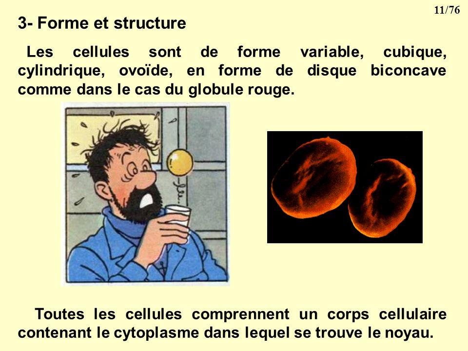 10/76 2-Taille des cellules Une cellule mesure en règle générale de 5 à 50 microns (µ). Par exemple, le diamètre du globule rouge est de 7 µ.