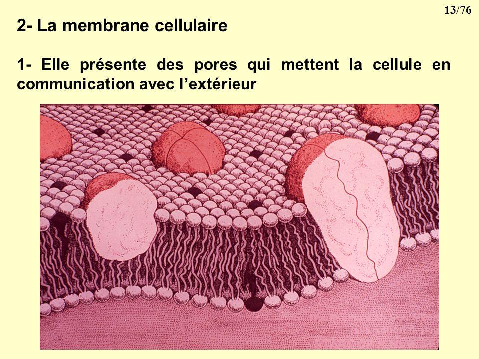 12/76 III- CYTOPLASME Le cytoplasme est composé de hyaloplasme renfermant des inclusions cytoplasmiques. Il est limité par la membrane cellulaire qui