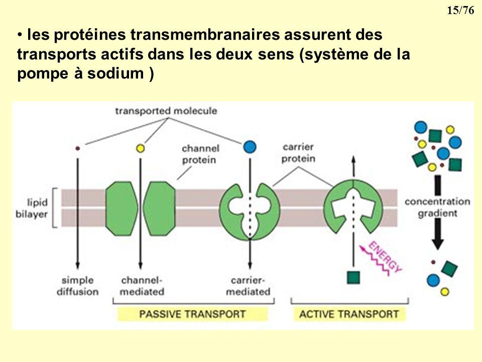 14/76 2- La membrane cellulaire 1- Elle présente des pores qui mettent la cellule en communication avec lextérieur
