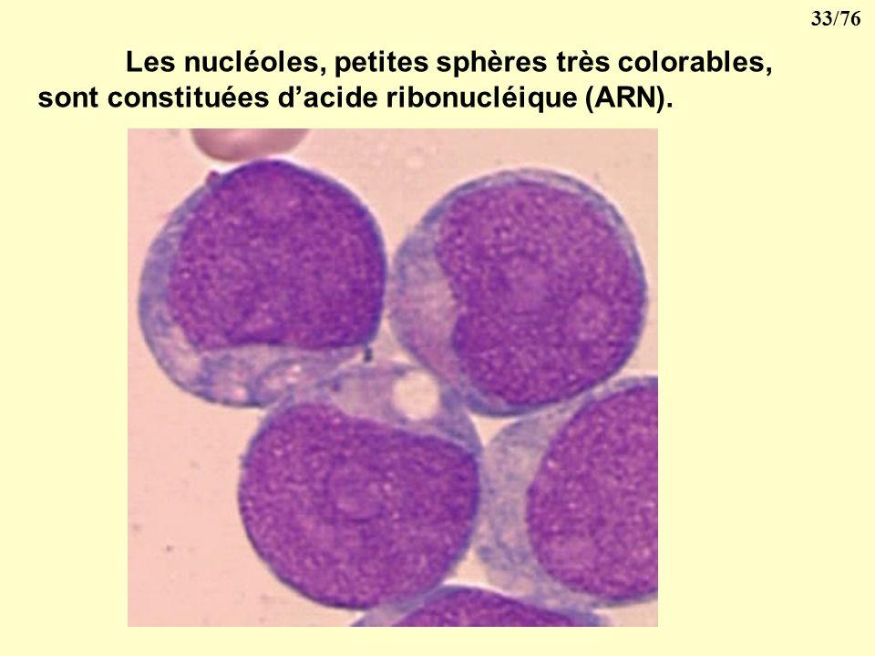 32/76 Il est limité par une membrane nucléaire présentant des pores qui permettent les échanges avec le cytoplasme. Il contient une substance visqueus