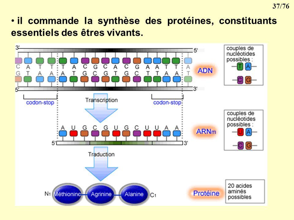 36/76 LADN possède schématiquement deux grandes propriétés : il est capable de se répliquer pour permettre la reproduction des cellules