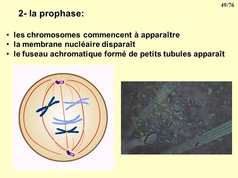 48/76 3- Reproduction cellulaire Les êtres unicellulaires se multiplient par division directe, cest lamitose. Les êtres pluricellulaires se multiplien