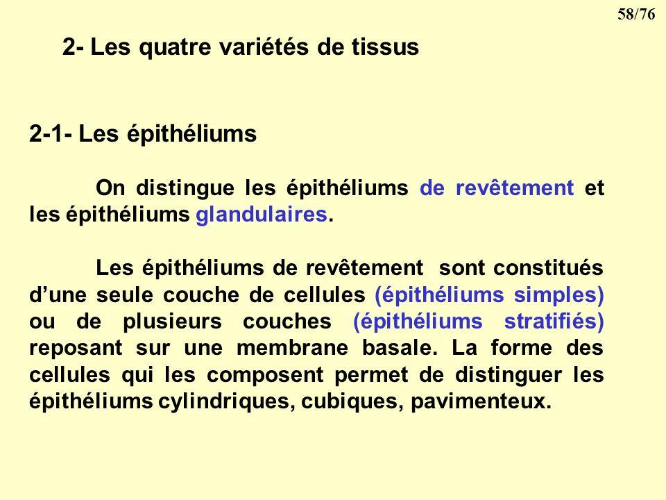 57/76 V- LES PRINCIPAUX TISSUS 1- Définitions Un ensemble de cellules différenciées concourant à une même fonction constitue un tissu. Létude des tiss