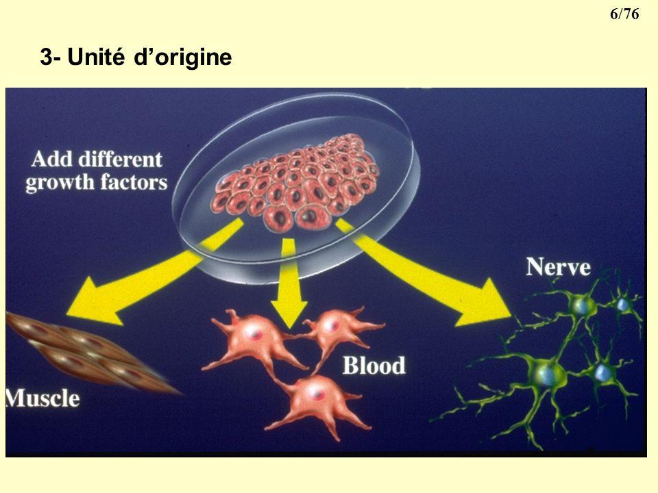 5/76 3- Unité dorigine Cellules souches : cellules capables de se différencier pour donner tous les types cellulaires présents dans un organisme. Les