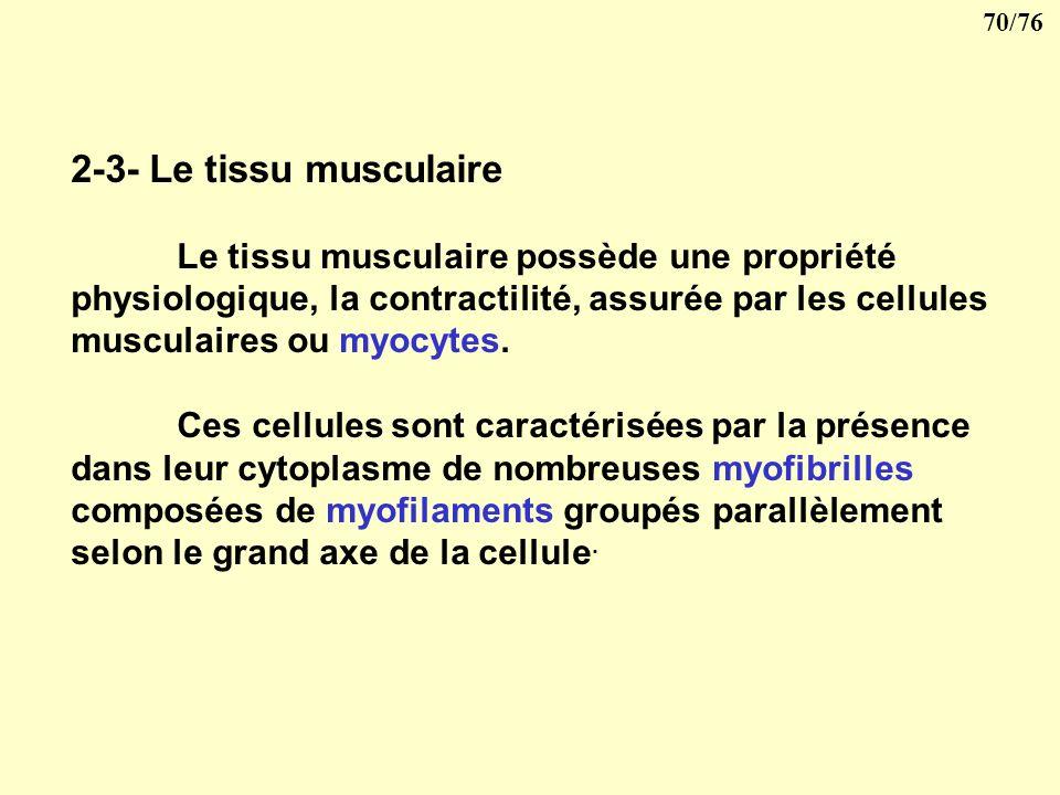 69/76 Le tissu conjonctif peut subir des transformations et donner: le tissu adipeux (surchage en graisse de ses cellules) le tissu osseux ou cartilag