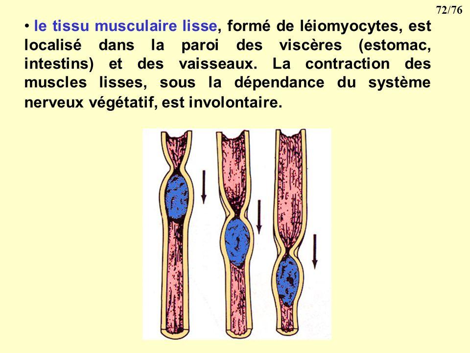 71/76 Il existe trois types de tissu musculaire composés de cellules musculaires ou myocytes : le tissu musculaire strié, qui est généralement associé