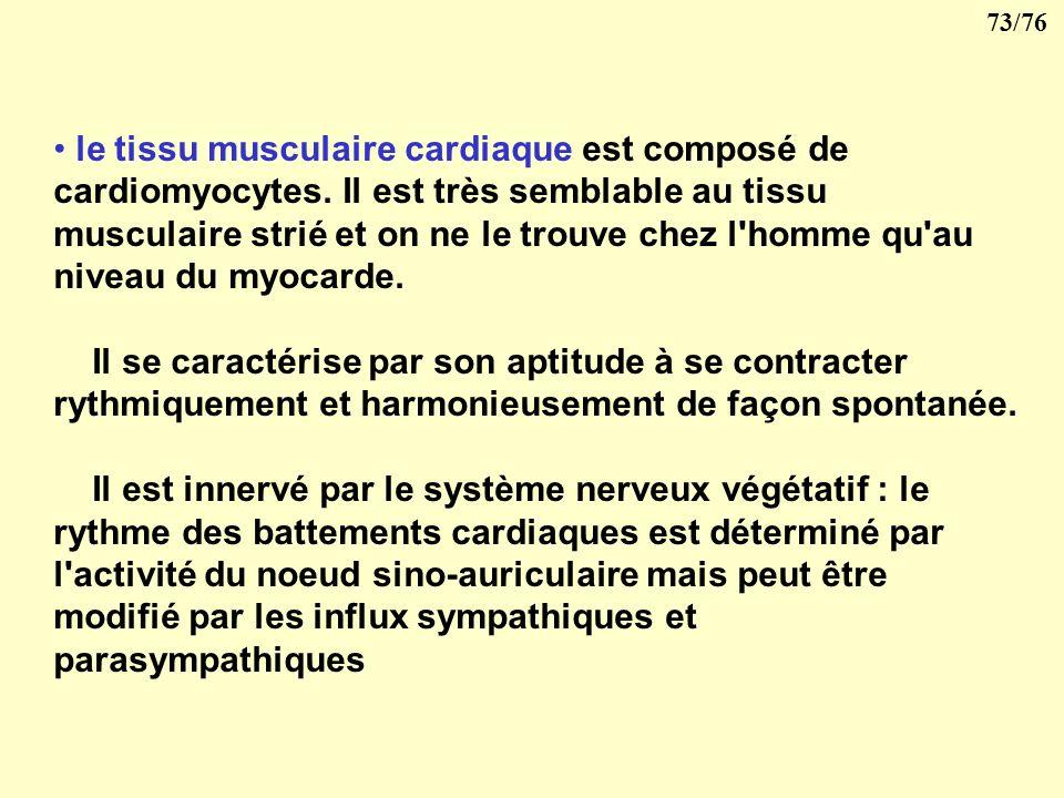 72/76 le tissu musculaire lisse, formé de léiomyocytes, est localisé dans la paroi des viscères (estomac, intestins) et des vaisseaux. La contraction