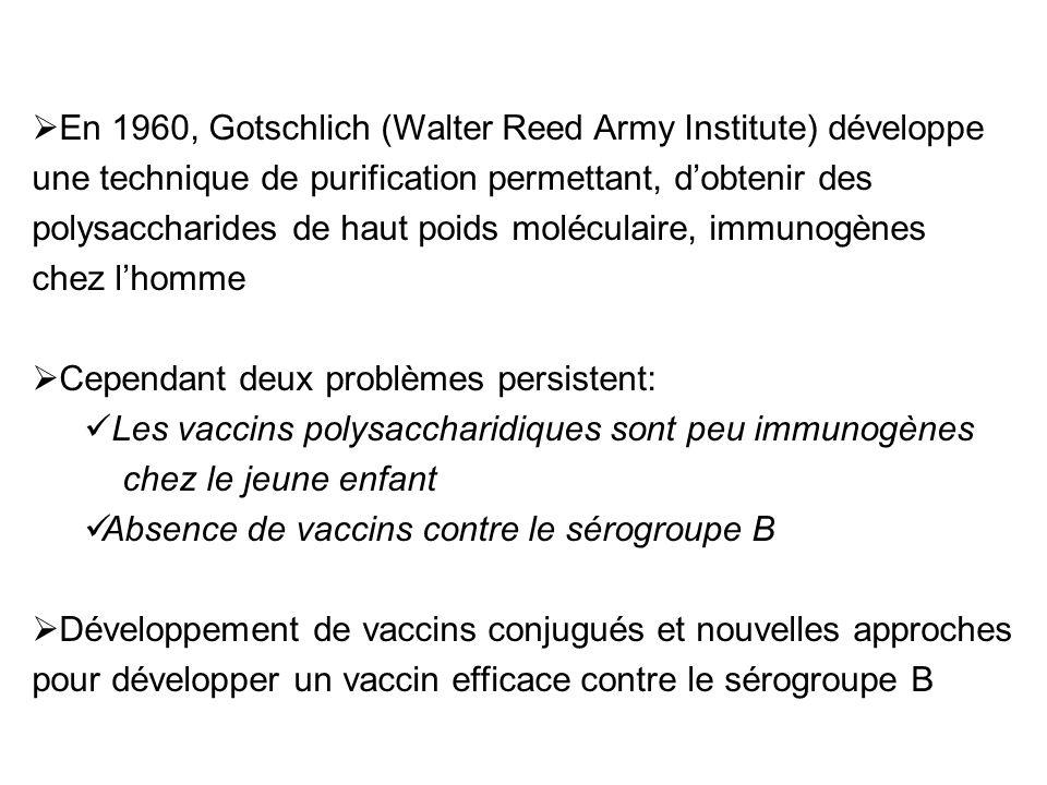 En 1960, Gotschlich (Walter Reed Army Institute) développe une technique de purification permettant, dobtenir des polysaccharides de haut poids moléculaire, immunogènes chez lhomme Cependant deux problèmes persistent: Les vaccins polysaccharidiques sont peu immunogènes chez le jeune enfant Absence de vaccins contre le sérogroupe B Développement de vaccins conjugués et nouvelles approches pour développer un vaccin efficace contre le sérogroupe B