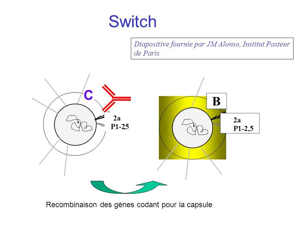 B 2a P1-2,5 2a P1-2,5 C Antibodies (local pressure giving a selective advantage) Recombinaison des gènes codant pour la capsule Switch Diapositive fournie par JM Alonso, Institut Pasteur de Paris