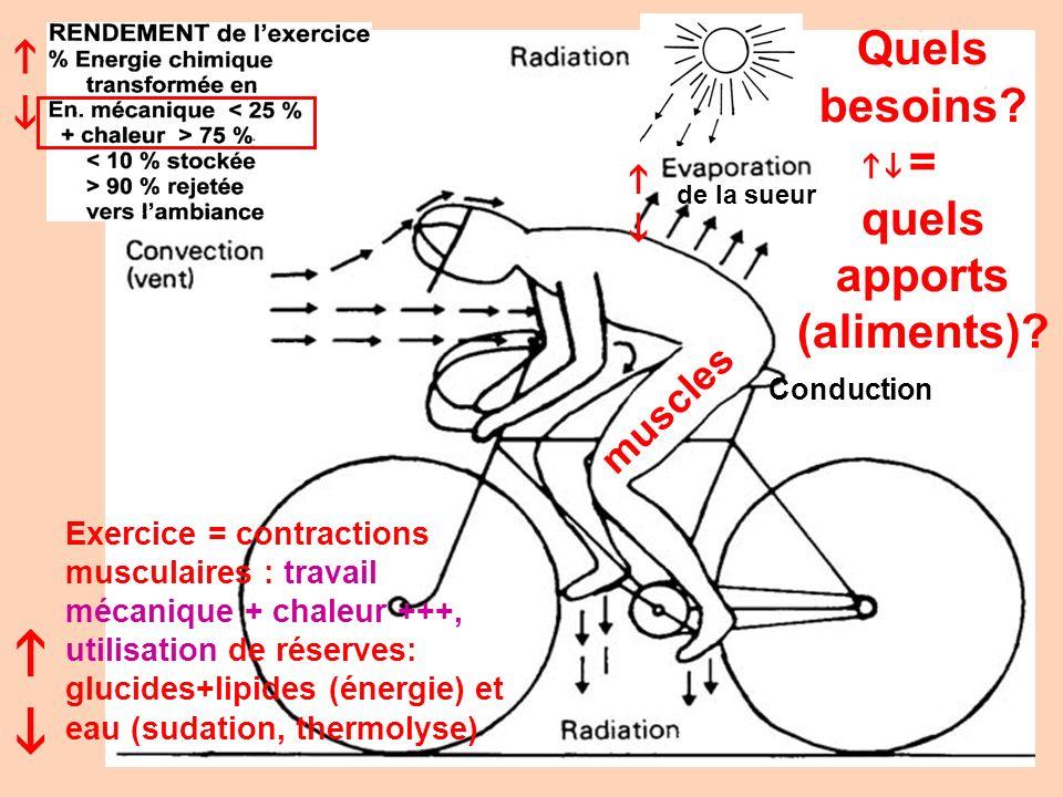 Conduction de la sueur Exercice = contractions musculaires : travail mécanique + chaleur +++, utilisation de réserves: glucides+lipides (énergie) et e