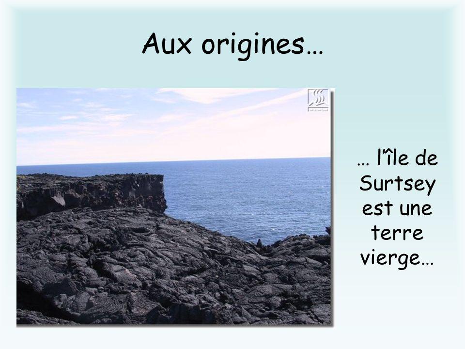 … lîle de Surtsey est une terre vierge…