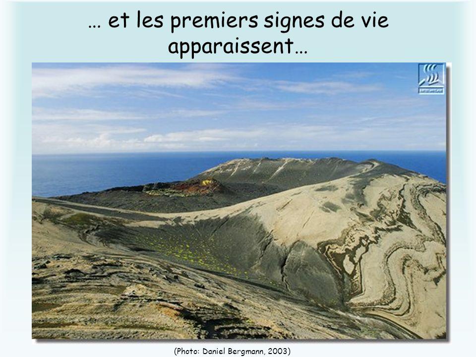 … et les premiers signes de vie apparaissent… (Photo: Daniel Bergmann, 2003)