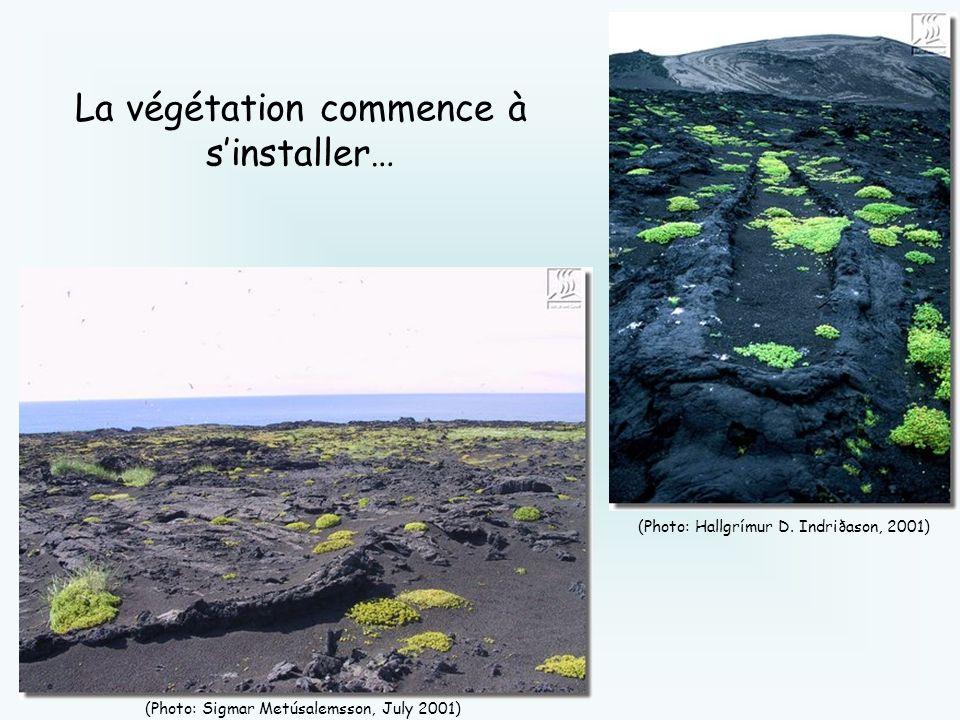 (Photo: Hallgrímur D. Indriðason, 2001) (Photo: Sigmar Metúsalemsson, July 2001) La végétation commence à sinstaller…
