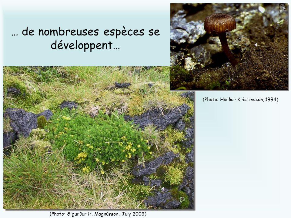 … de nombreuses espèces se développent… (Photo: Sigurður H. Magnússon, July 2003) (Photo: Hörður Kristinsson, 1994)
